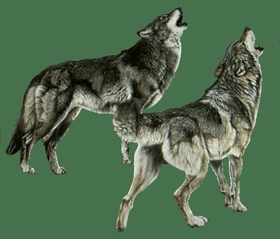 волк с подругой